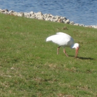 bird-photos-from-crane-lakes-2