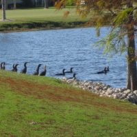 birds-of-crane-lakes-006