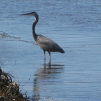 birds-of-crane-lakes-013